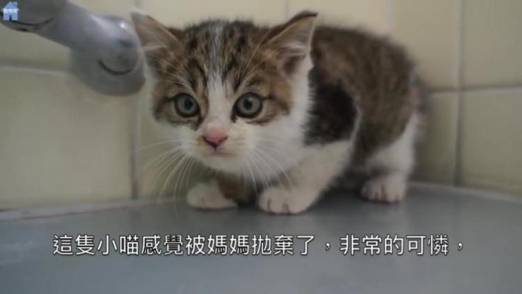 主人晚上帮猫咪盖被子,不小心把它吵醒了,接下来主人的举动太暖心了!