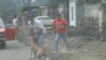 路人被比特咬的倒地,动弹不得,请远离以下十种危险的狗狗