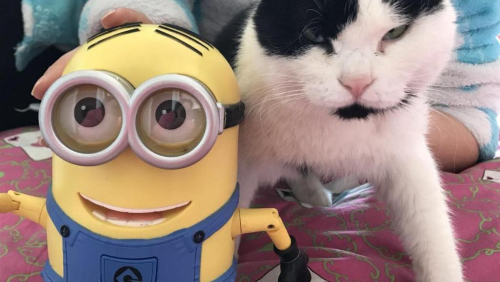 当猫咪遇上小黄人热脸贴着冷漠猫,猫: 这什么鬼?吵死了