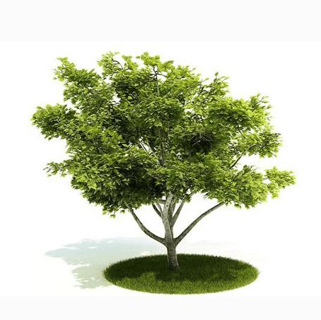 我童年的一棵树, 怀念我那远去的妹妹, 天堂没有苦痛