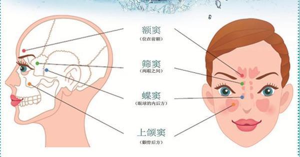 鼻子骨结构图解
