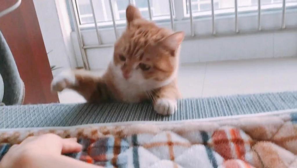 和猫猫玩拍小手,被狡猾的喵喵偷袭了