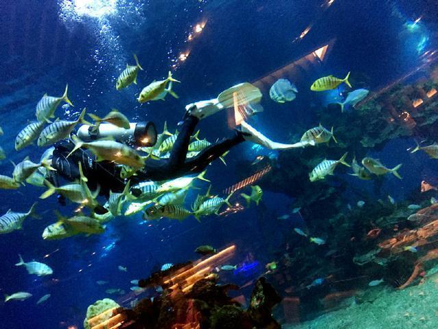 神秘又带点梦幻的海洋世界,通过全透明玻璃,可观赏到海水碧波荡漾