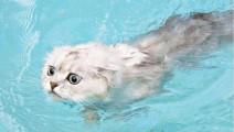 把喵星人放入水中的瞬间,世界都静止了,我都看懵了