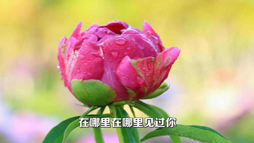 华语乐坛最经典的歌曲《甜蜜蜜》,没有之一。