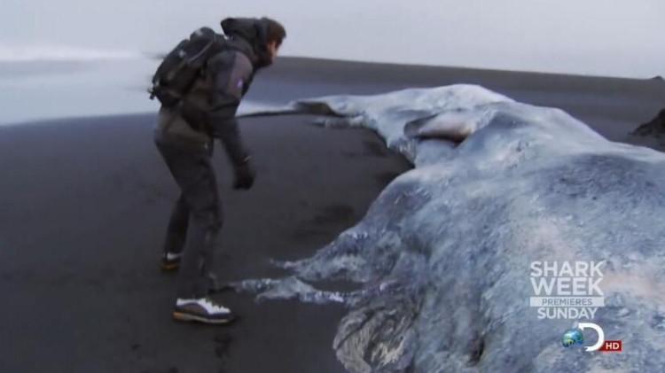 贝爷还有什么东西捡不到?这次又捡到一只大鲸鱼!
