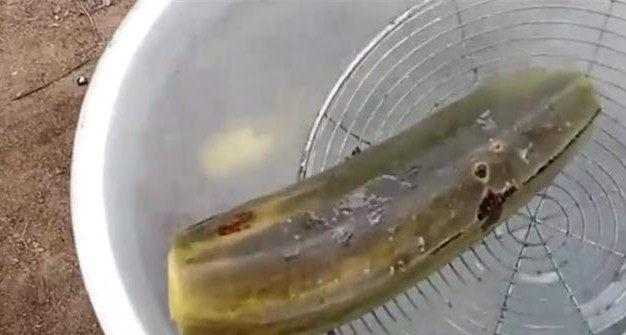 玉米皮编织小动物步骤