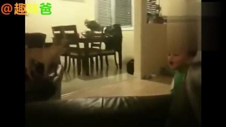 笑死人了,婴儿和汪星人相互模仿到停不下来