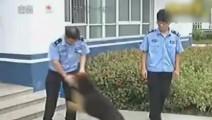 主人被抓家中狗狗给主人求情,主人得知后哭了!