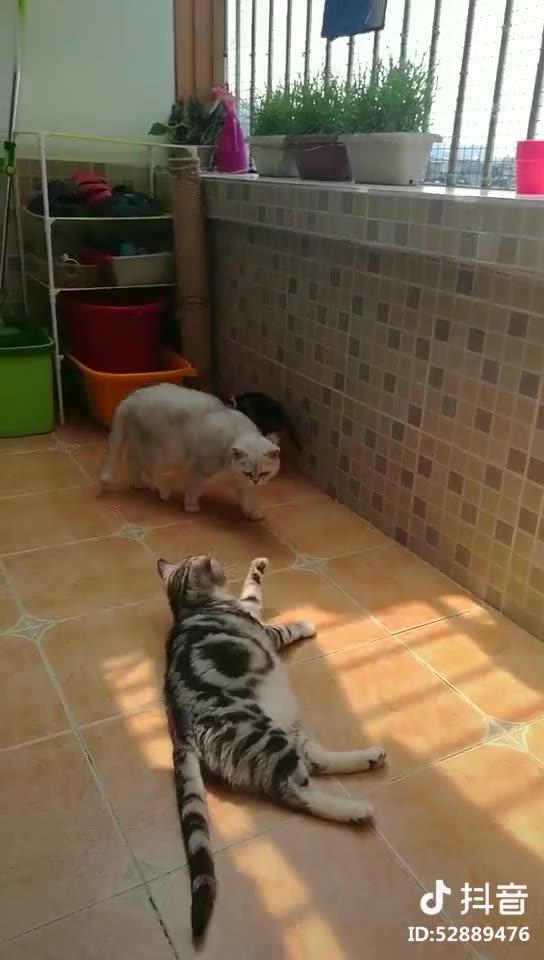 猫情人宠物生活馆的视频