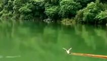 山中野钓鲫鱼,鱼竿直接往下拖鱼线不左也不右