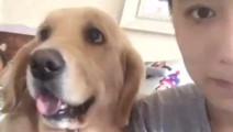 狗狗忽然被主人咬了一口,金毛瞬间懵了,下一秒后的剧变笑翻网友