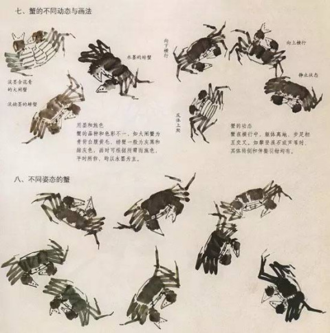 中国国画技法—螃蟹的画法步骤:先以深墨画出背壳中间一笔.