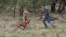 爱犬被袋鼠锁喉,主人救狗心切,上去一拳把袋鼠打懵!