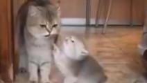 小奶喵想要喝奶,而猫妈妈想帮它舔毛,两只就这样互相僵持下,最后