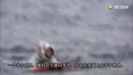 现实版美人鱼 日本女人潜入深海挖鲍鱼 古老行业有几百年历史