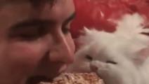 这位主人好暖心,拿着美食跟猫咪一起分享