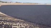 美国为了抗旱,向湖泊投放大量塑料球,看完后你想说什么?