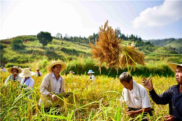 中国农民丰收节暨黔东南香禾发展大会10月10日将在从江召开