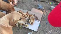 男子将剩下的饭菜给流浪狗吃 流浪狗感动哭了