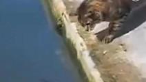 猫抓鱼,动作好利索