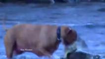发洪水了马路上都是鱼,可把狗狗给累坏了!
