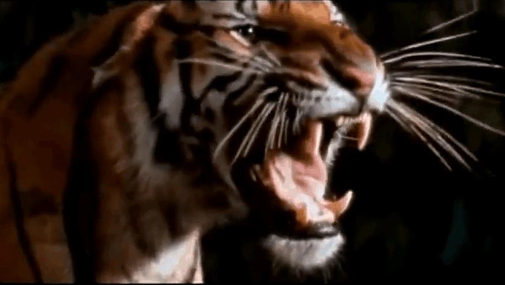 狗狗为了救小主人,与老虎疯狂厮杀,森林之王见到也怕三分