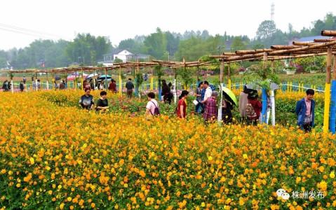 茶陵民俗风景图片