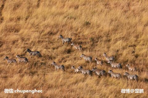 动物大迁徙, 世上最壮观的自然奇迹