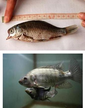 日本发现畸形海鲜蔬菜长相恐怖 还有人敢吃吗?