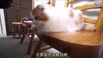 岛国一位小哥企图给家里的三只猫洗澡,你们感受一下什么叫做鹰的眼睛熊的力量豹的速度