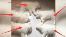 主人下班回家就看到这个画面,真是让狗狗们的睡姿给吓一跳!