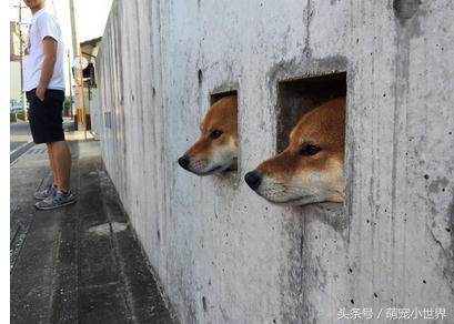 墙上写请勿喂食, 再来我就笑喷! 这三只从墙壁长出来的狗狗太可爱