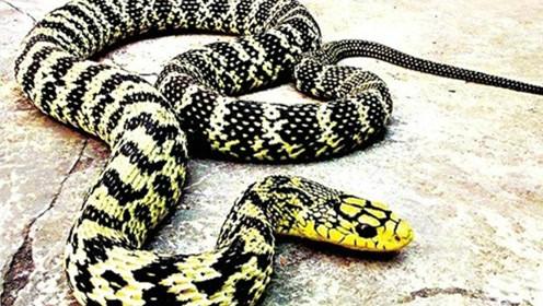 动物 蛇 496_280