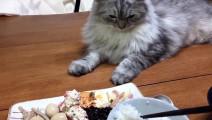 猫咪你的伙食太好了,我要去你家蹭饭,给我你家地址