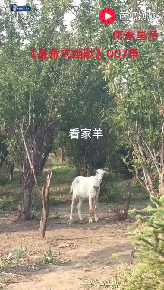 皇帝小说: 皇帝导演《皇帝式幽默》007集: 公园发现一只羊