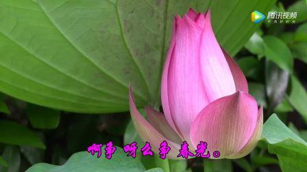 李玲玉演唱经典老歌《采茶舞曲》甜美至极!