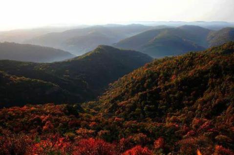 庆阳子午岭森林公园