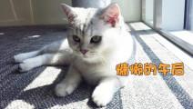 冬日吸猫#都说猫咪爱晒太阳,这只萌猫晒着晒着就睡着了,睡姿好萌!