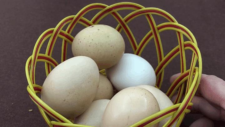 如何分辨鸡蛋是否变质?只需一碗清水,教你快速辨别出鸡蛋好坏