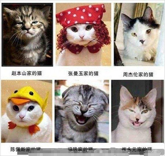 超搞笑动物模仿秀, 搞笑表情