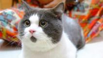 前方高能!猫咪搞笑视频集锦 萌猫失败片段