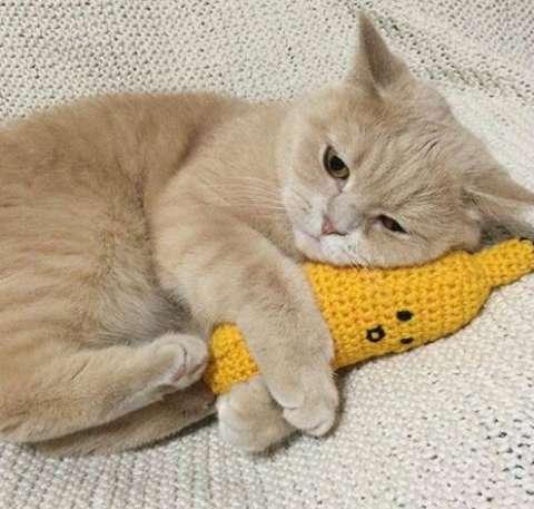 为什么说橘猫十只有九只胖?