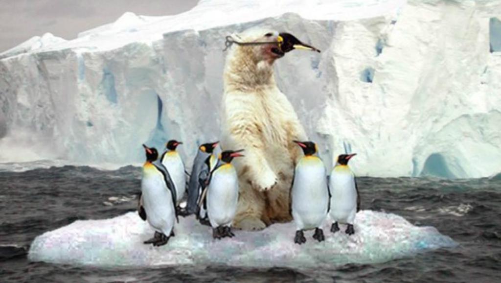 壁纸 动物 国画 企鹅 1024_578