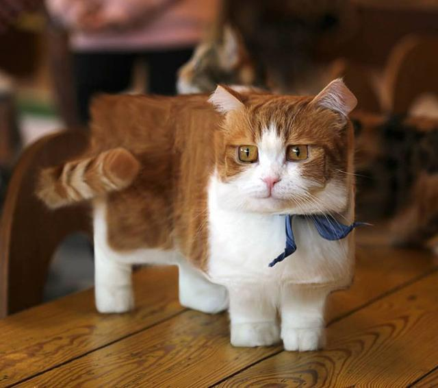如果现实世界中的动物也像游戏里一样「方方的」,会不会很可爱?
