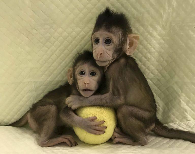 球猴子步骤分解