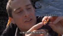 贝爷的故乡资源丰富啊,海边随处可见大鱼,紫海胆吃不完!