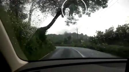 灵异事件: 在马路上拍到的真实鬼魂