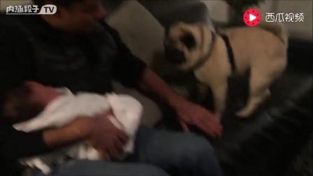 狗狗第一次见小主人,满满的都是爱,就像自己当了妈妈