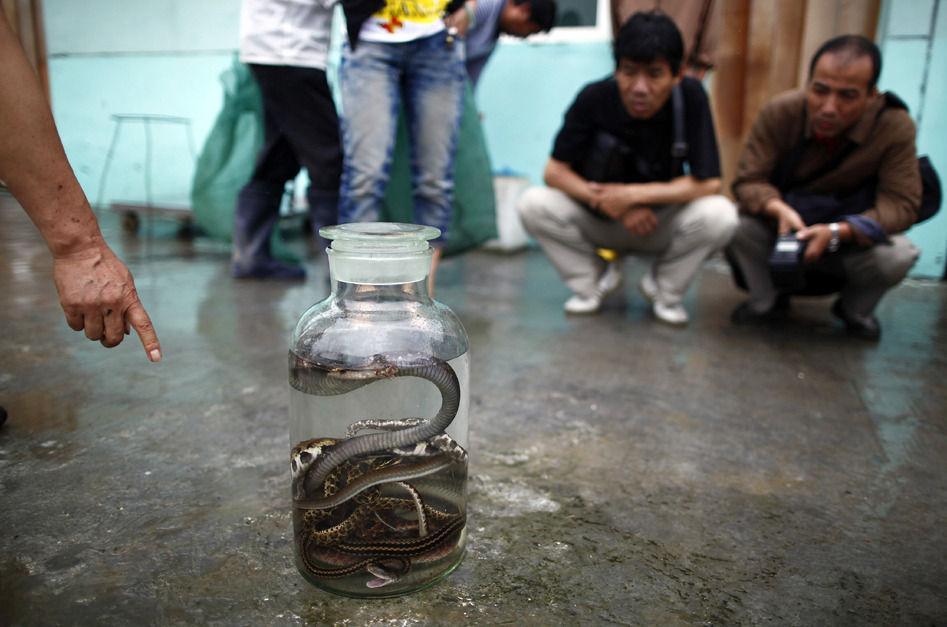"""这个地方被称为""""中国第一蛇村"""", 家家户户都养蛇"""